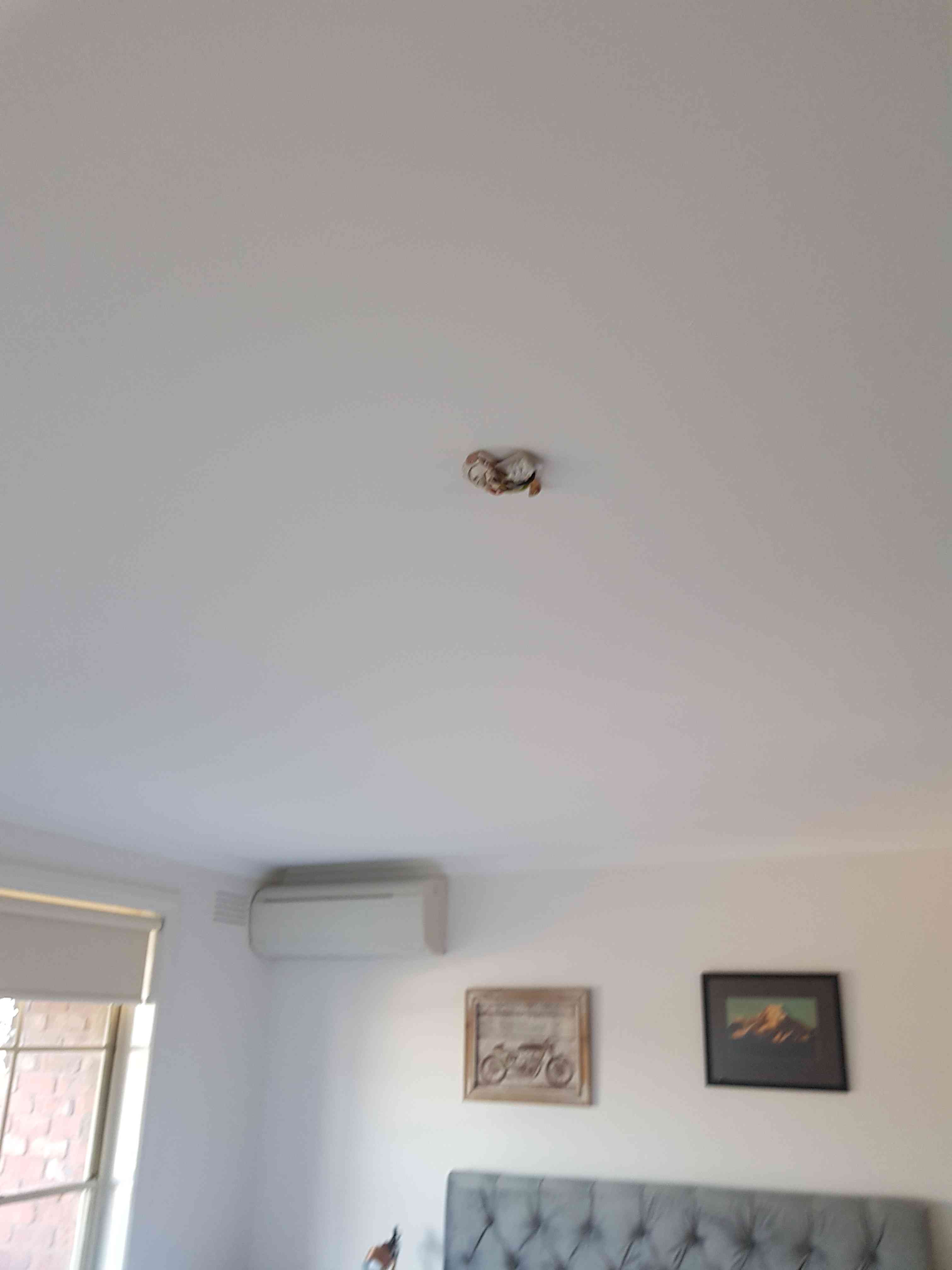 Light Fitting at Hamlyn Heights VIC By Mr. Electric of Geelong via i4Tradies